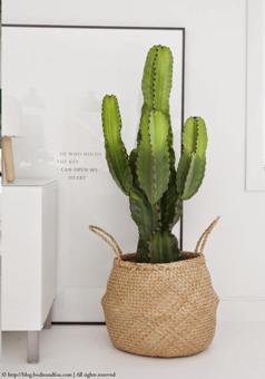 panier plante